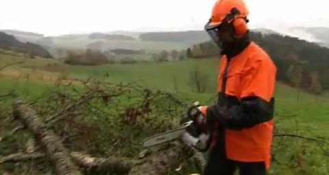 Mensch und Motorsäge Folge 08 - Morscher Baum